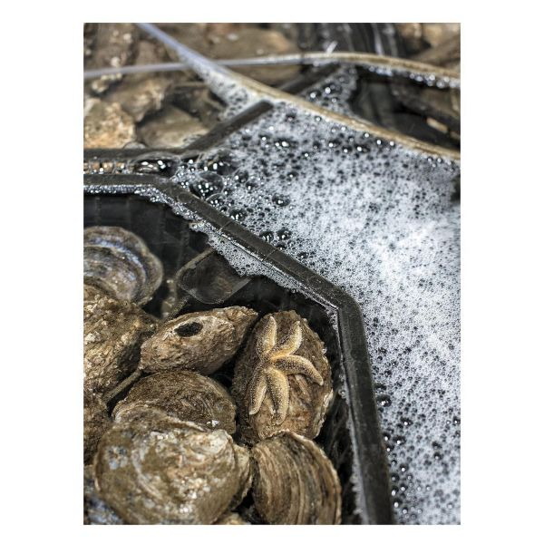 New article online- link in profile, scroll down.  Since @svendbonde and he's Glyngøre Shellfish today is honored as Royal Courd Supplier I have published an article about Svend and he's passion for oysters. The article is from HÅNDVÆRK bookazine no.1  #bookazine